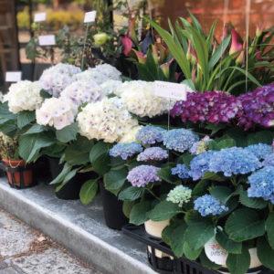 写真:花の販売