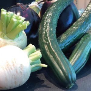 写真:京野菜